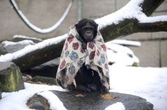 A cold wet monkey.